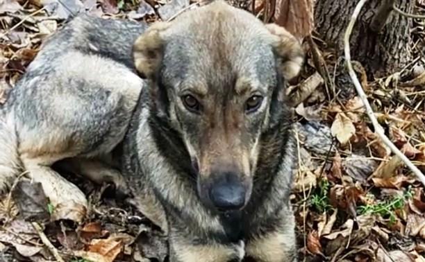 Надоел, слишком много шерсти: в Туле хозяева выбросили собаку на улицу