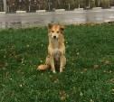Добрая собака замерзает на улице