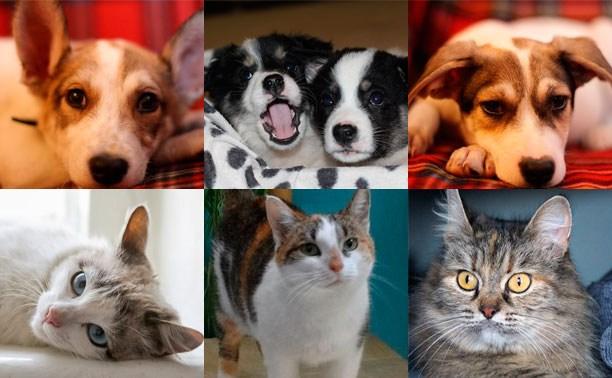 Три кошки и четыре щенка ищут любящую семью