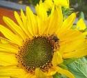 Выбираем красивые кадры в фотоконкурсе «Желтое настроение»