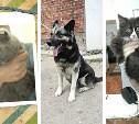 Котёнок, овчарка и вислоухая шотландская кошка в ожидании дома и помощи