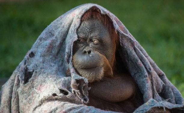 Где в Туле приличное одеяло... купить?