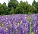 10 растений-агрессоров, которые могут поработить ваш сад