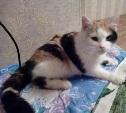 В Криволучье найдена домашняя кошка