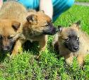 Битум, кран и тонны железобетона: спасенные щенки выжили и ищут хозяев