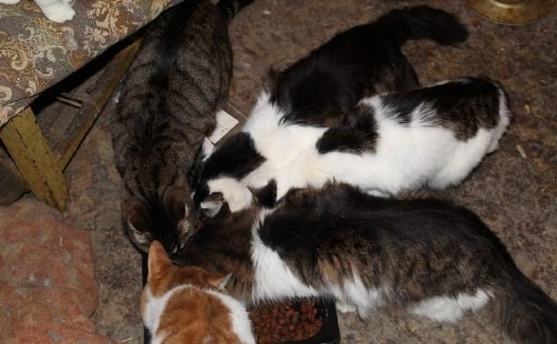 Срочно нужна передержка для кошек
