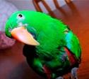 Хочу птичку!