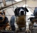 Ситуация с бездомными животными в Туле и области