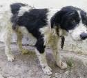 В Богородицке собаку избили лопатой. Животному нужна помощь!