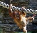 Московский зоопарк  6 мая