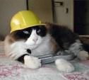 Когда коту делать нечего...