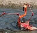 Сказ о том, как Океан поглотил Фламинго.