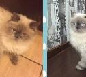 Помогите найти кошку за вознаграждение