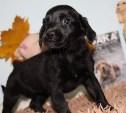10 щенков из тульского приюта, которым нужен дом