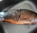 Рыба моей мечты!??