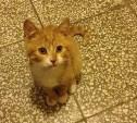 Восемь кошек в поисках тепла и любви