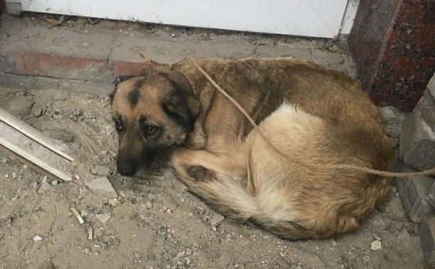 Возле автовокзала найдена собака!