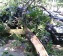 Во дворе дома на Октябрьской упало дерево
