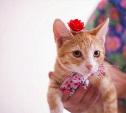 Рыжая красотка Мирта станет вашим счастьем