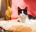 Кошка по имени Спарта ждёт новых хозяев