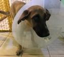 Спасенная Myslo собака начала ходить