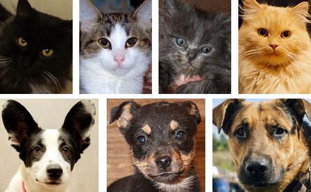 Четыре кошки и три собаки в добрые руки