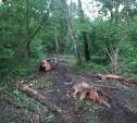 Вырубка леса на Косой Горе-2.(продолжение!) Лес продан фирме Рога и Копыта???