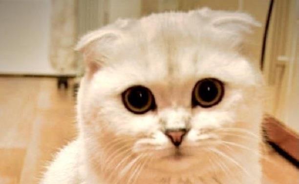 Подводим итоги фотоконкурса «Пушистые котики»