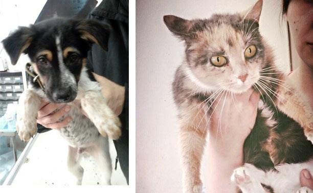 Щенок Дукс и кошка Луша в поисках хозяев