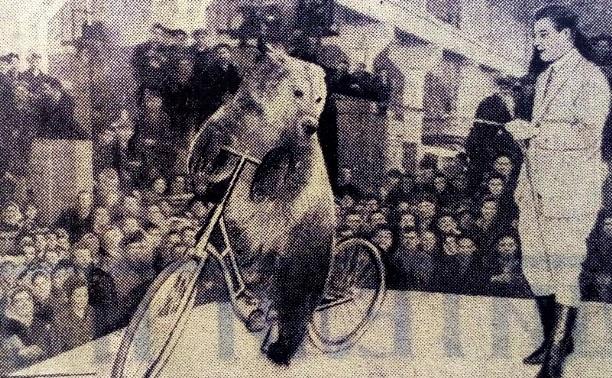 19 ноября: Медвежий цирк Филатова на заводе «Штамп»