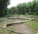 Кому мешает лес??? или дорога в ад...