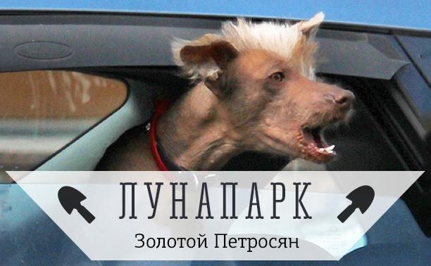 Типичный водитель