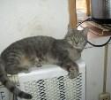 Кошка Надюша ждёт хозяев