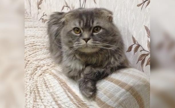 Красивый котик в добрые руки