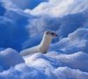 Поздравляем авторов самых зимних фото