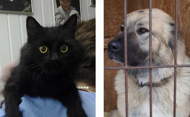 Кошка Маришка и среднеазиатская овчарка Лада ждут, когда их заберут домой