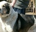 Собаки из центра «Любимец» ищут хозяев