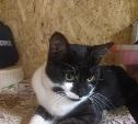 Найден кот, возможно домашний. Кто потерял?