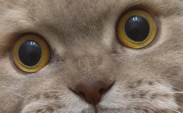 Голосуйте за фото милых котиков