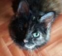 Кошки, спасенные из жуткой квартиры, благодарят читателей Myslo