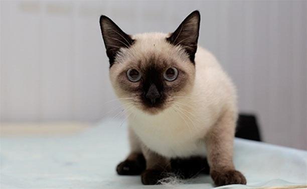 Ну а кошки – это кошки!