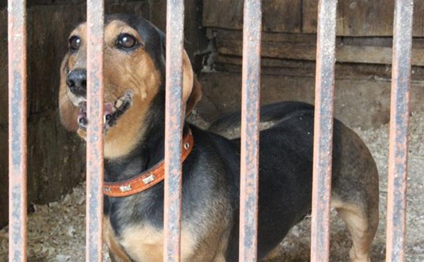 13 собак из центра «Любимец» ищут хозяев
