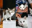 Кошки остались без хозяйки. Срочно ищем новый дом