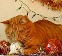 Новогодние опасности для домашних животных