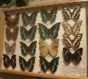 Выставка тропических бабочек и хищных растений в Туле
