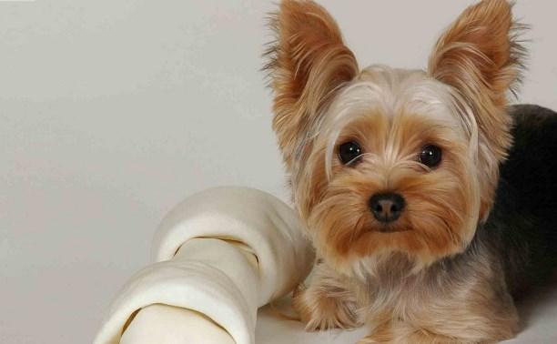 Где можно недорого подстричь собаку? (йорка)