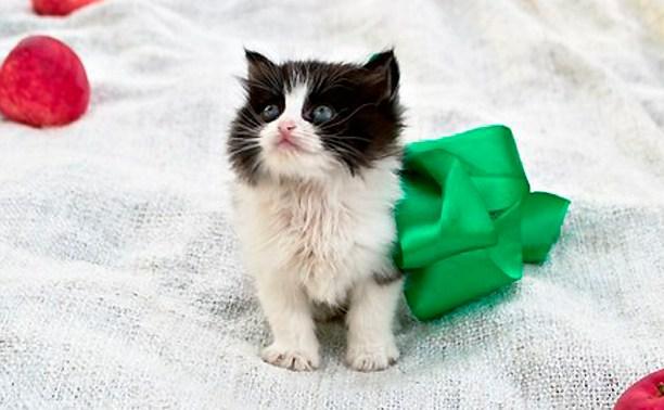 11 котят ищут уютный дом