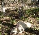 Кот-красавец с радостью переедет с улицы в ваш дом
