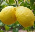 2 декабря: в Туле пропали из продажи лимоны