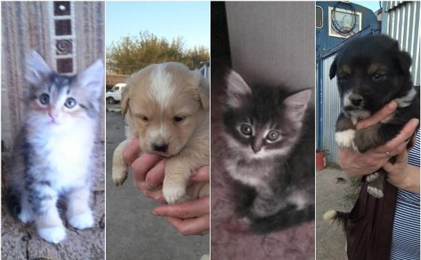 Котятам и щенкам со стройки нужен дом